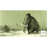 Logo of the podcast Metsästettiinkö viimeiset villamammutit sukupuuttoon vai kuolivatko ne nälkään tai janoon?