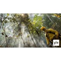Logo du podcast Voiko sademetsät vielä pelastaa?