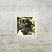 Logo of the podcast Episode 52: Birding in Uganda, Part II