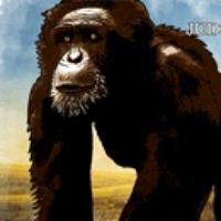 Logo du podcast Zoo Nebraska
