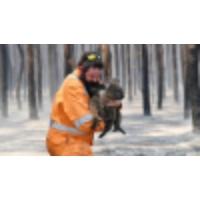 Logo of the podcast 1 billion animals have died in Australian bushfires, ecologist estimates