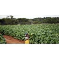 Logo of the podcast Les terres arables en Afrique, entre fantasmes et réalités