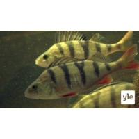 Logo of the podcast Proteiinit, rasvat ja maapallon kantokyky - kala on ylivertainen ravintopakkaus