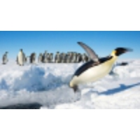 Logo of the podcast With global warming, Emperor penguins will 'have no place to breed' says researcher