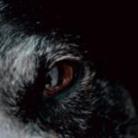 Logo of the podcast MP 133: Biologiczne przywództwo – czego lider może nauczyć się od wilków?