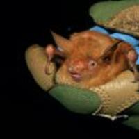 Logo du podcast Orange Bat, Greenland Bacteria, COVID Anniversary, Alien Argument. Jan 22, 2021, Part 2