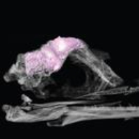 Logo du podcast Medieval Bones, Bird Ancestors And Dinosaurs. August 27, 2021, Part 2