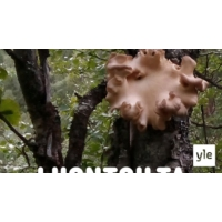 Logo of the podcast Vähän puinen sieni