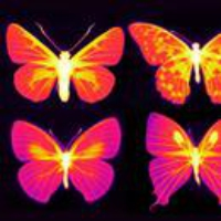 Logo of the podcast Breast Cancer Cultural History, Butterfly Wings. June 5, 2020, Part 2