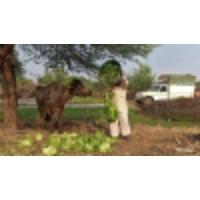 Logo of the podcast Food supply logistics need a coronavirus 'reset,' says UN economist