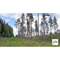 Logo of the podcast Onko avohakkuulle taloudellisia vaihtoehtoja?