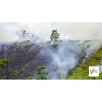 Logo du podcast Koronakriisi kiihdytti sademetsän tuhoa Amazonissa