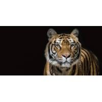 Logo du podcast Des animaux sauvages en vente sur Internet