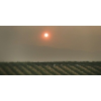 Logo of the podcast Amid wildfires, US farmworkers labor with few protections
