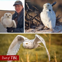 Logo of the podcast Best of This Birding Life: Snowy Owl Invasion with Scott Weidensaul