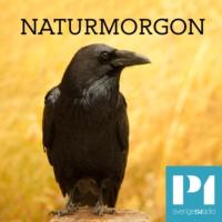 Logo du podcast Naturmorgon