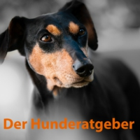 Logo of the podcast Der Hunderatgeber-alles Rund um den Hund