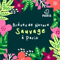 Logo du podcast Brèves de Nature Sauvage à Paris