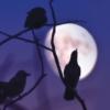 Logo du podcast Tenera è la notte