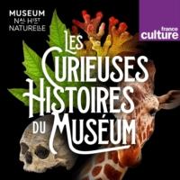 Logo of the podcast Les Curieuses histoires du Muséum
