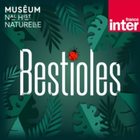 Logo of the podcast Bestioles