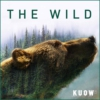Logo du podcast The Wild