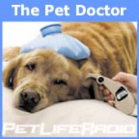 Logo of the podcast The Pet Doctor - Episode 312 Inside Outside, You Decide