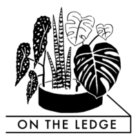 Logo du podcast Episode 105: five houseplants for beginners