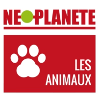 Logo of the podcast La cause animale, un nouvel enjeu politique qui va peser