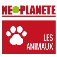 Logo of the podcast Néoplanète - Les animaux