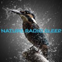 Logo de la radio NATURE RADIO SLEEP