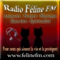 Logo of radio station Radio Feline