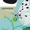 Couverture de l'album Papillon