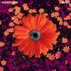 Couverture de l'album Irises - Single