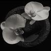 Couverture de l'album Corpse Flower
