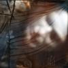 Couverture de l'album Dor