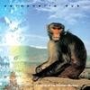 Couverture de l'album Calming of the Drunken Monkey