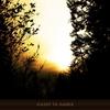 Couverture de l'album Asleep in Amber