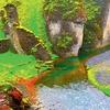 Cover of the album Rainforest