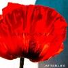 Cover of the album Shikasta