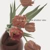 Couverture de l'album The Amateur View (Deluxe Edition)