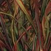Couverture de l'album Where Wildness Grows