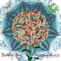 Couverture du titre Metamorphosis