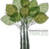 Couverture de l'album Traces