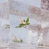 Couverture de l'album Windflowers