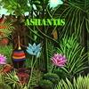 Couverture de l'album Ashantis
