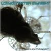 Couverture de l'album Psycho Magnet