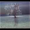 Couverture de l'album Unisono