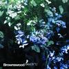 Couverture de l'album Brownswood Electric