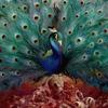 Couverture de l'album Sorceress
